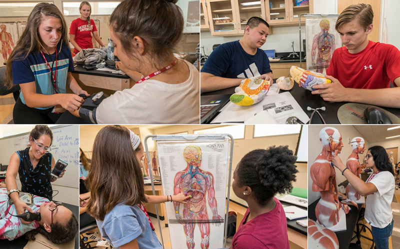 Anatomy and Physiology Camp
