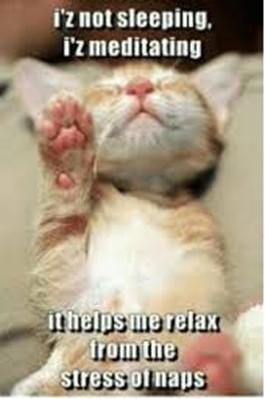 Meditating kitten'